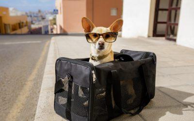 In viaggio con gli animali: consigli da non dimenticare